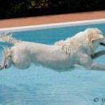 Hotel cani in piscina Rimini