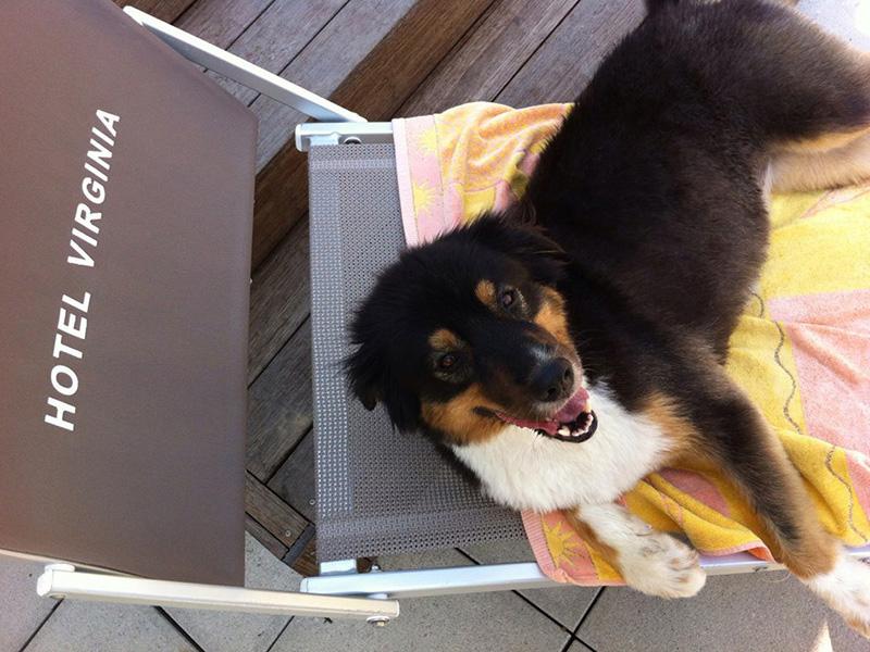 Hotel Pet Friendly Rimini per cani