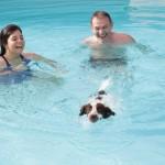 Hotel dove si può far fare bagno al cane