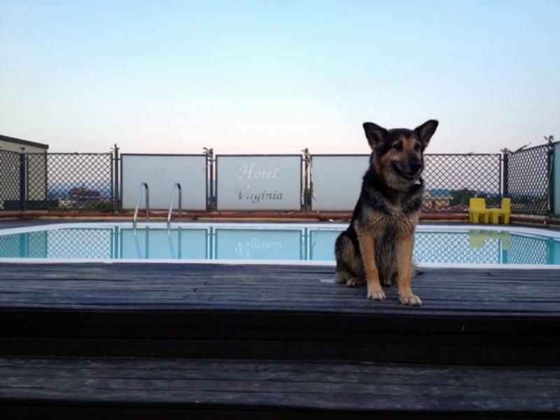Hotel Pet Friendly che accettano animali in piscina