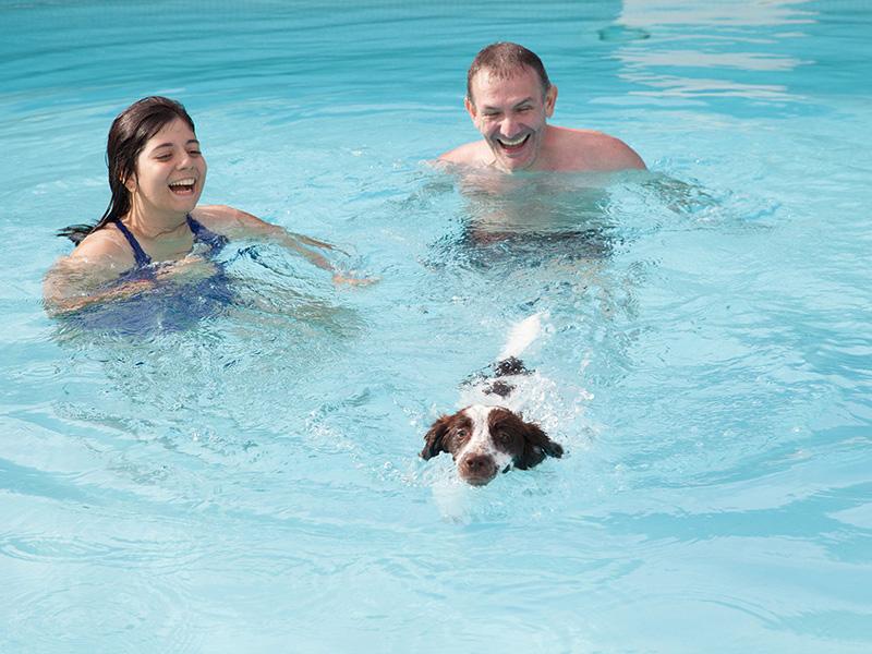 Hotel Rimini con piscina che accettano cani