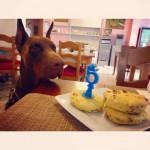 Hotel Virginia servizi compleanno animali