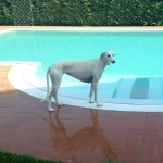 Hotel Virginia piscina cani